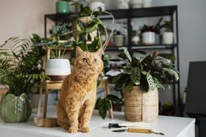 gato na mesa com plantas ao redor foto