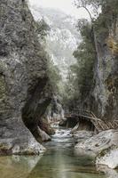 bela floresta e rio foto