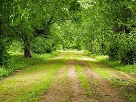 Estrada rural verde ladeada por árvores maduras com folhagem de verão foto