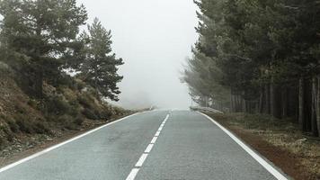 bela paisagem com árvores e estrada foto