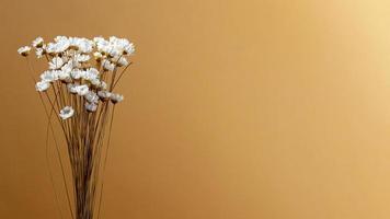 flores brancas em fundo marrom foto