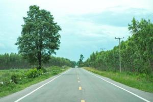 paisagem de estrada local de asfalto vazio com uma grande árvore e floresta de eucaliptos foto