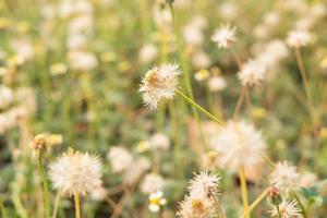 fundo de flor de verão foto
