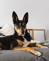 cachorro adorável sentado na cama foto