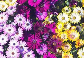 fundo de flores coloridas foto