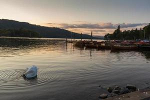 cena romântica ao entardecer de um lindo cisne mudo em primeiro plano e barcos atracados em um píer no lago Windermere foto