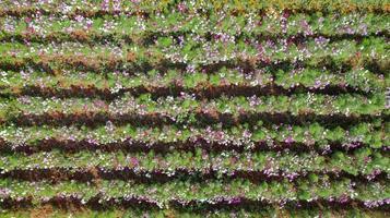 fundo de jardim de flores com belas flores coloridas na Tailândia foto