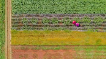 fundo de jardim de flores com lindos guarda-chuvas coloridos foto