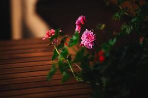 flor rosa em vasos ao ar livre em fundo de madeira foto