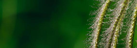 orvalho na flor da grama foto