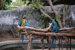 araras azuis e amarelas estão em pé em uma vara foto