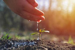 jovem agricultor regando uma planta jovem que cresce no jardim com o conceito de dia da terra de luz solar foto