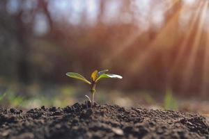 planta jovem crescendo em um jardim com o conceito de dia da terra de luz solar foto