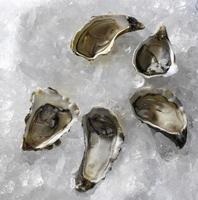 ostras frescas no gelo foto