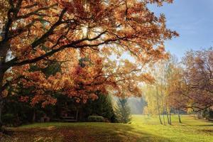 paisagem quente de outono em uma floresta com os raios de sol do sol foto
