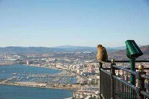macaco macaque barbary com vista para o porto de gibraltar foto