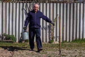 agricultor adulto com um balde carrega batatas no jardim foto