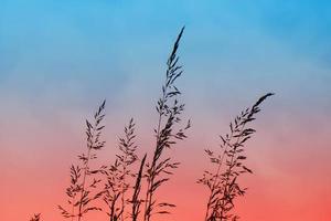 silhueta da planta de flores e pôr do sol na primavera foto