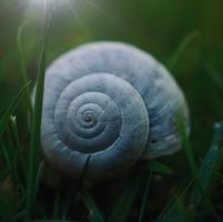 iluminou o caracol branco na natureza foto