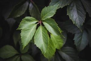 fundo de textura de folhas verdes foto