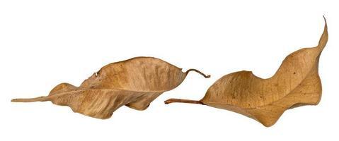 foto macro de duas folhas marrons secas