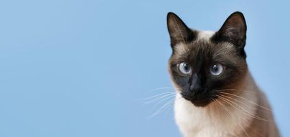gatinho adorável com parede monocromática atrás dela foto
