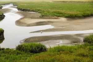 costa alemã do mar do norte com dunas de areia, lama, grama, água e gaivotas foto