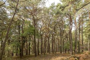 vista sobre um vale arborizado com pinheiros e árvores decíduas no outono foto