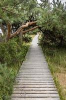 cais de madeira na reserva natural na costa do Báltico com pinheiros e grama foto