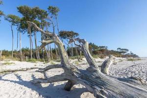 Um velho tronco de árvore fica em uma praia de areia com dunas e céu nublado foto