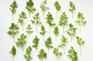 folhas de salsa padrão de ervas picantes foto