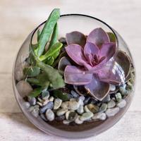 lindo terrário com flor de cacto e areia de rocha dentro do vidro foto
