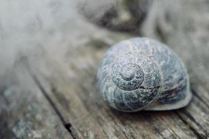 pequeno caracol branco na natureza foto
