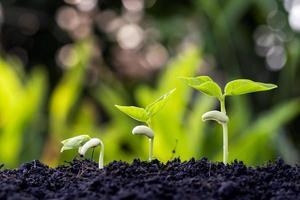 ordem de crescimento de plantas jovens ou árvores jovens em fundo natural foto