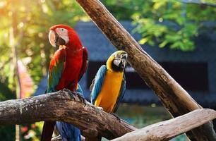 pássaro colorido arara no galho de árvore foto