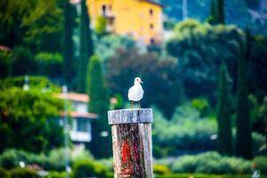 gaivota em um ancoradouro de madeira do lago garda em riva del garda, trento, itália foto