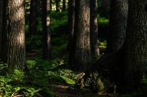 floresta da natureza dos Cárpatos em colinas verdes nas montanhas de verão foto