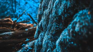 musgo na casca da árvore na floresta foto