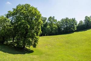 gramado verde com árvores foto