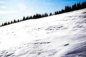 pinheiros e neve perto de cima larici no planalto de asiago, vicenza, itália foto