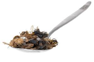 muitos insetos mortos repousam em uma colher de sopa isolada foto