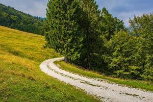 caminho alpino entre as pastagens verdes do vale posina foto
