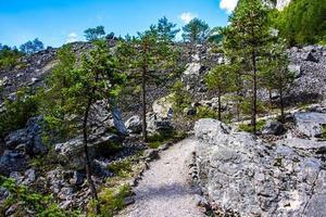 caminho entre as árvores foto