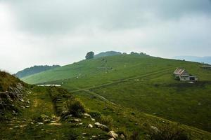 pastagens alpinas com vacas foto