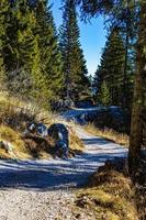 trilha entre os pinheiros foto