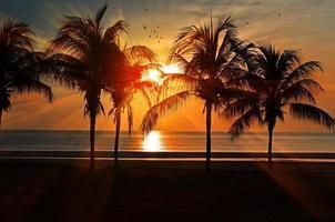 pôr do sol na praia pássaros calmas nuvens foto