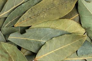 tom orgânico de textura de folha de louro seca foto
