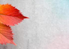 folhas de outono ou outono em um fundo cinza foto