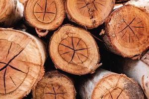 a textura do fundo da árvore cortada foto