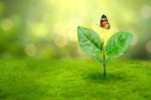 muda de planta e uma borboleta na luz da manhã no fundo da natureza foto